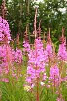 Plants and Animals - The Taiga Biome